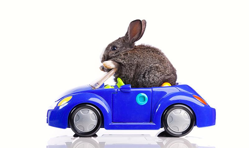 Osterhase im Auto schaut lieber nach Fernbussen